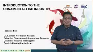 umtmooc introduction to the ornamental fish industry