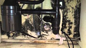 mold under kitchen sink mold why you should look under sinks often youtube