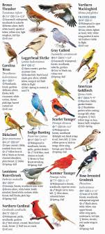 Tennessee Birds images Birds of tennessee including the great smoky mountains quick jpg