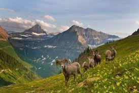 Rugged Landscape Glacier National Park Montana Rugged Landscapes Wilderness