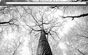 tree branches chrome web store