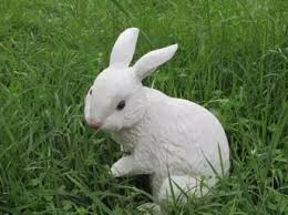 rabbit rex picture more detailed picture about animal