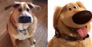 28 hilarious dog memes for 2018 quoteshumor com