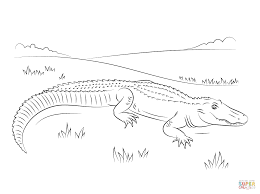 cute american alligator coloring page free printable coloring pages