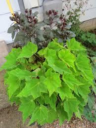 Medusa Planter Greenbow This Summer U0027s Planters