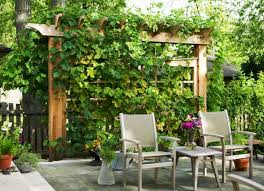 Inexpensive Backyard Privacy Ideas Fancy Design Inexpensive Backyard Privacy Ideas 22 Fascinating And