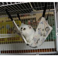 discount large cat hammock 2017 large cat hammock on sale at