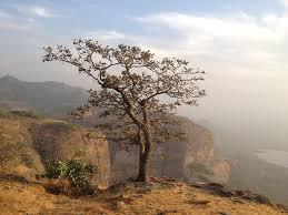 free photo tree mountain cliff edge cliff free image on