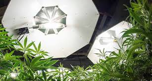 best hps grow lights the best hps grow lights buyer s guide top 6 brand reviews
