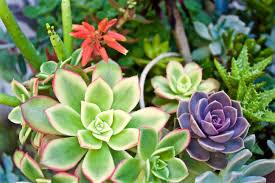 free succulents fat plants san diego