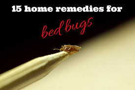 Orkin Bed Bug Spray Effective Home Remedies For Bed Bugs Full Guide