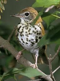 Nj Backyard Birds by List Of Birds Of New Jersey Wikipedia