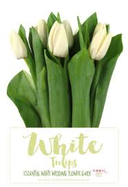 wedding flowers types white wedding flowers guide types of white flowers names pics