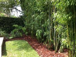 using bamboo in landscaping tree for fence landscape design