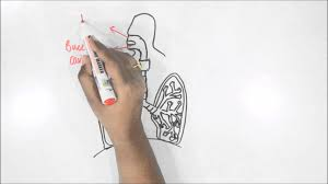 how to draw human respiratory system youtube