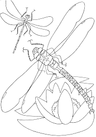 printable insect coloring pages kids cute free