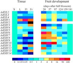 kiwifruit eil and erf genes involved in regulating fruit ripening