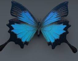 butterfly 3d models cgtrader