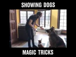 Magic Trick Meme - showing dogs magic trick youtube