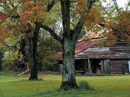 South Carolina landscapes images Rural barn fall south carolina landscape photograph by kathy fornal jpg