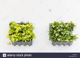 green plant in planter box hanging on white cement wall garden