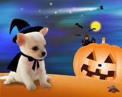 halloween wallpaper for computers puppy in a halloween costume it s so hard being a puppy halloween