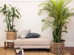 best plants for bedroom love the best plants to grow in your bedroom
