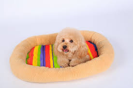 Cute Puppy Beds Mat Lipstick Picture More Detailed Picture About Beds For