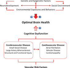 defining optimal brain health in adults a presidential advisory