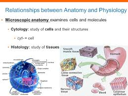 Anatomy And Physiology Cells And Tissues Chapter 1 Introduction To Anatomy And Physiology Ppt Video
