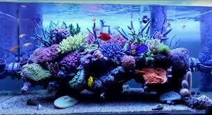 japanese aquarium japanese reef tank archives reef builders the reef and marine