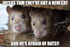 Rodent Meme - 5 gifts that definitely won t be under your tree this christmas