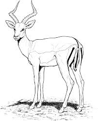 free gazelle coloring pages