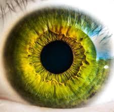 Diabetic Blindness Jama Study Shows Telemedicine Can Improve Screening Access