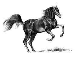 mustang horse drawing artstation b u0026w horse sketches holger kirste