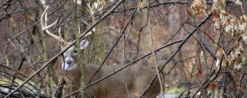 New York wildlife tours images Hunting in new york jpg