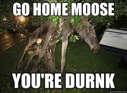 Moose Meme - go home moose you re durnk go home moose youre drunk quickmeme
