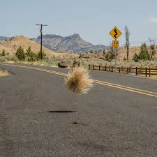 the world u0027s best photos of road and tumbleweed flickr hive mind