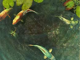 wallpaper ikan bergerak untuk pc gambar ikan koi animasi bergerak lucu fish wallpaper hd image gif