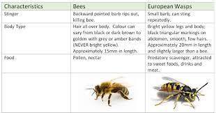 european wasps u2013 geelong beekeepers club inc