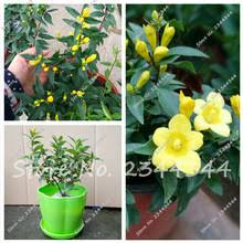 Very Fragrant Plants - popular jasmine trees buy cheap jasmine trees lots from china