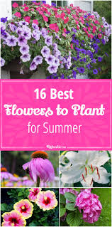 most popular flowers 16 best flowers to plant for summer tip junkie