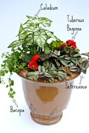 Plant Combination Ideas For Container Gardens How To Create A Container Garden Fairview Garden Center
