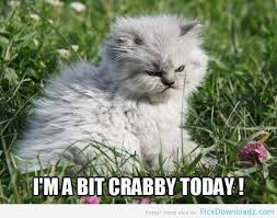 funny angry cat hilarious pics featured pics story