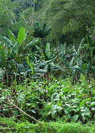 Tropical Plants Pictures - tropical vegetation wikipedia