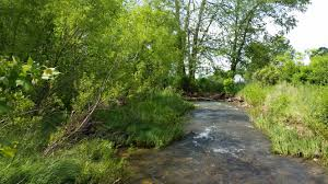 streamside forest buffers are important for water and wildlife