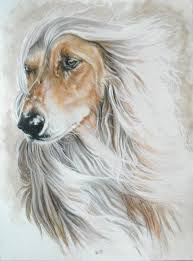 afghan hound breeders victoria tazi archives national purebred dog day