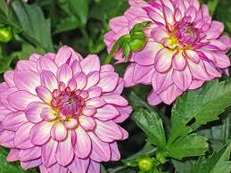 free images nature blossom petal bloom color botany close