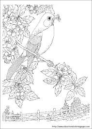 nature coloring pages adults free printable coloring