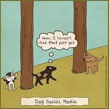 Social Media Meme Definition - social media meme definition social media manager by oussamari